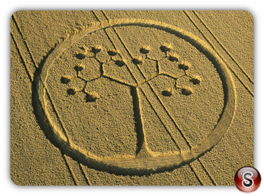 Crop circles - Farley Mount, Hampshire 2002