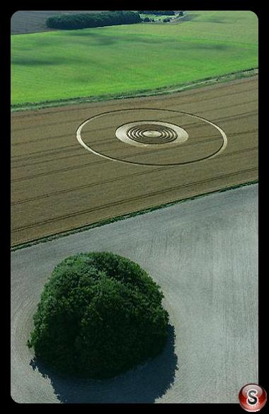 Crop circles - The Ridgeway above Avebury Wiltshire 2005