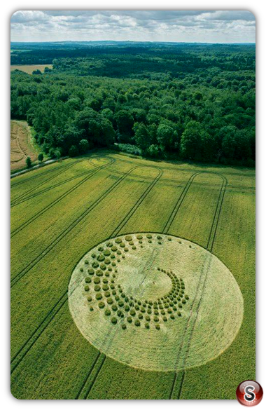 Crop circles forest hill nr Marlborough  Wiltshire UK 2014