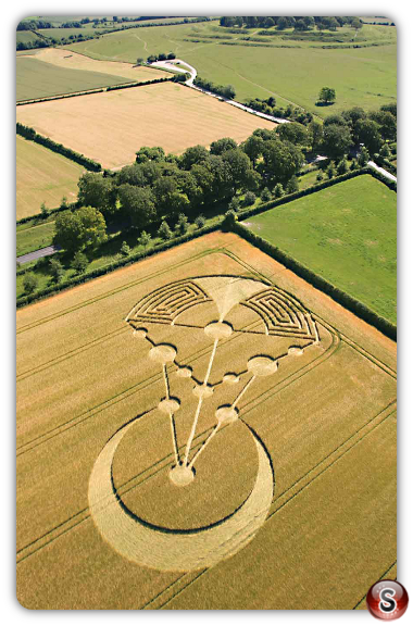 Crop circles Badbury Rings, Near Wimborne Minster, Dorset 2014