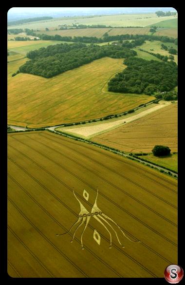 Crop circles - West Overton Hill Wiltshire UK 2012