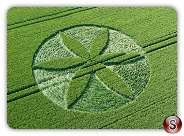 Crop circles - Yatesbury Wiltshire UK. 2013