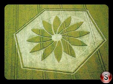 Crop circles - Yatesbury Wiltshire 2012