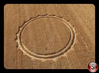Crop circles - Cisterna Lazio Italy 2013