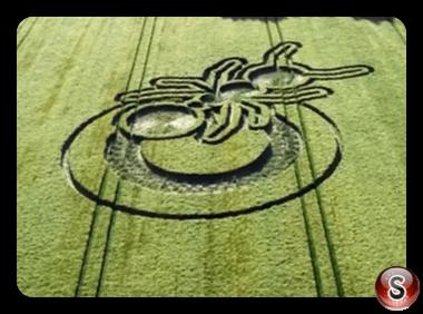 Crop circles - Sparticles Wood Surrey 2019