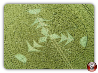 Crop circles Hacken Hill - Wiltshire 2016