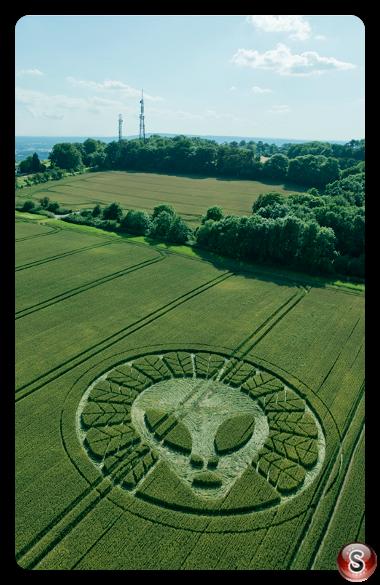 Crop circles Reigate - Surrey 2016