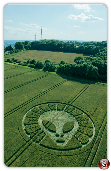 Crop circles - Reigate Surrey 2016