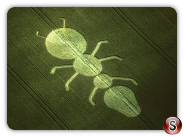 Crop circles - Henwood, Hampshire 1997