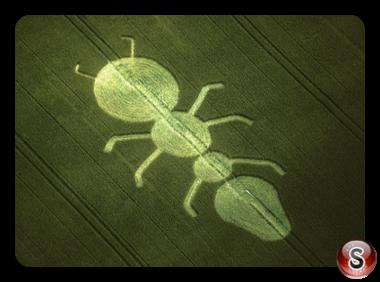 Crop circles - Henwood Hampshire 1997