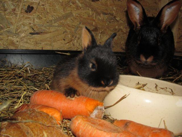 etwas kleinere Karotten wären auch nicht schlecht