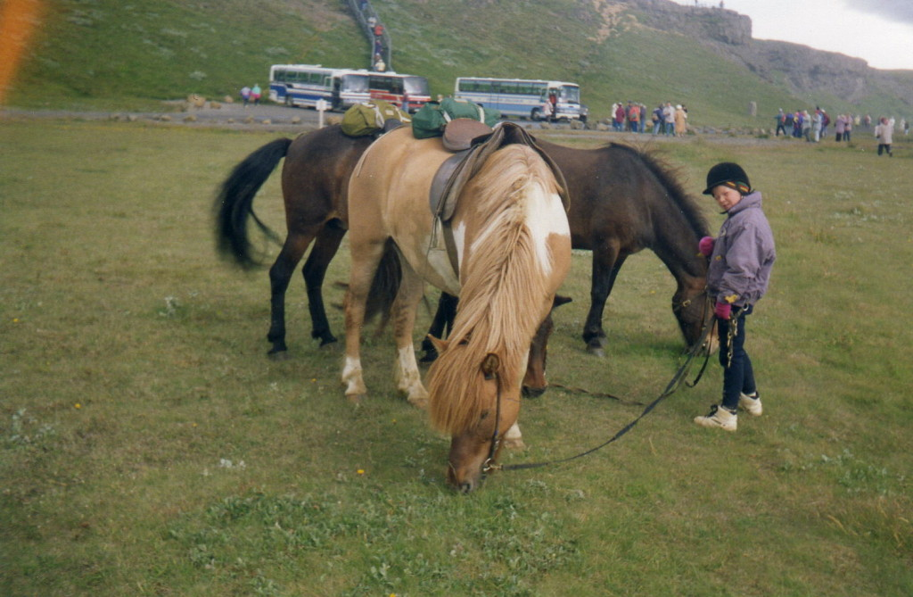 Island-Ponys