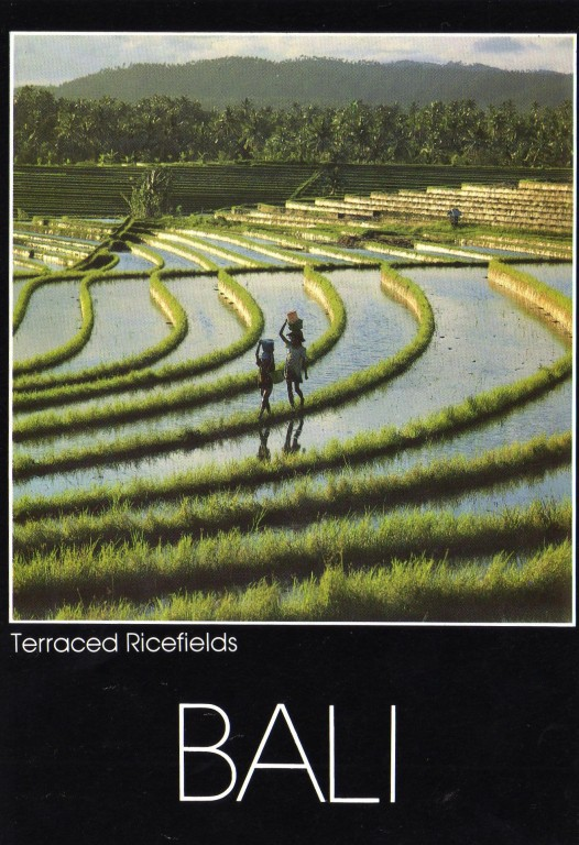 Bali ein Reisfeld