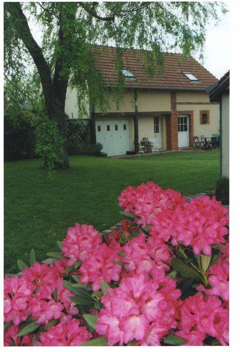 à l'heure des rhododendrons en fleurs