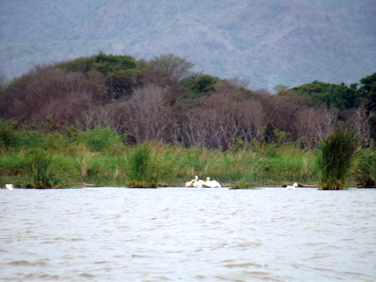 La plage des pélicans. Le Lac Chamo en Ethiopie. Voyage Séjour Trek Trekking Randonnée Road Trip en Ethiopie Visite de la Vallée de l'Omo en Ethiopie.