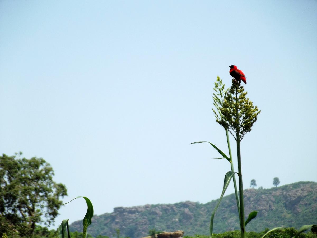 Voyage Séjour Trekking et randonnée, Road Trip en Ethiopie. Visite d'Axum. Le Palais de la Reine de Saba / Le Palace de Makeda