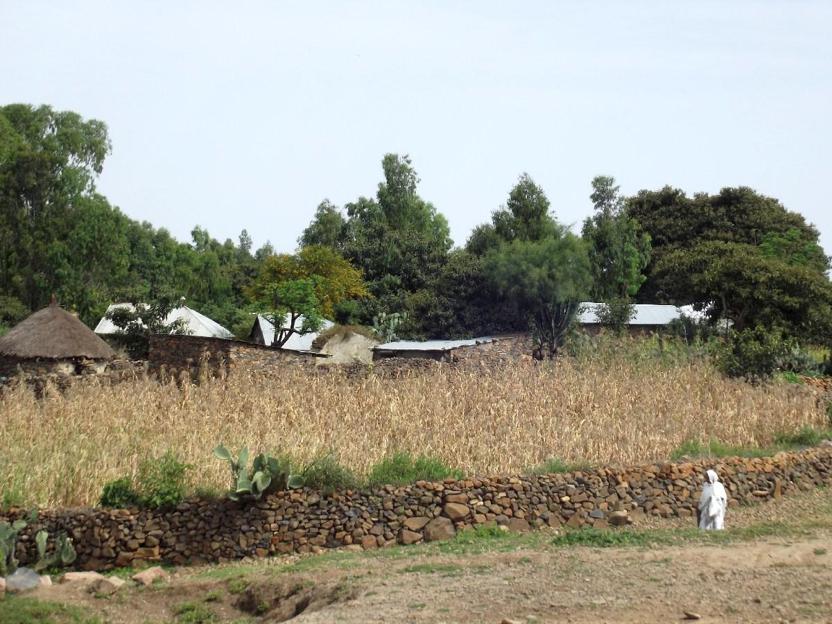 Trek, randonnée et visite d'Axum en Ethiopie. Autour d'Axum. La nature environnante.