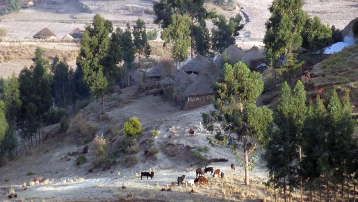 Randonnée autour de Debre Libanos en Ethiopie. Voyage Séjour Road Trip Trek Trekking Randonnée en Ethiopie. Debre Libanos Road Trip en Ethiopie route de Debre Libanos à Addis Abeba
