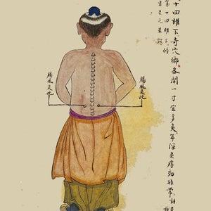 Médecine Traditionnelle Chinoise Le Foie