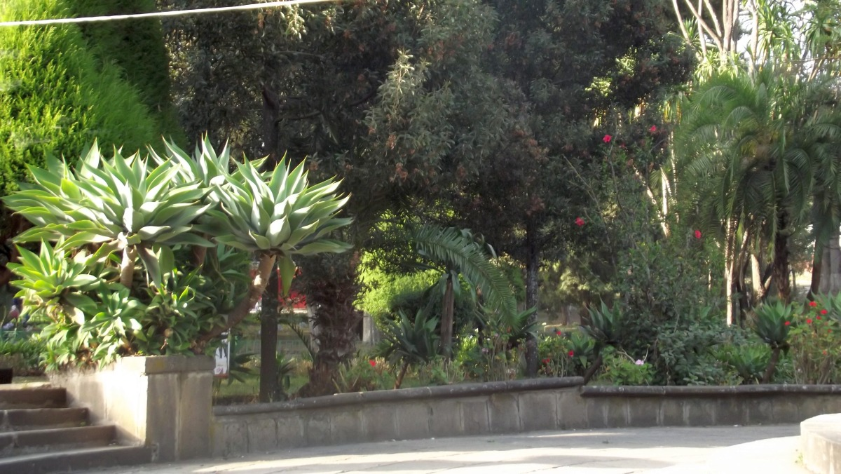 Visite de Addis Abeba University Voyage Séjour Trekking et randonnée, Road trip en Ethiopie.  Région Amhara.