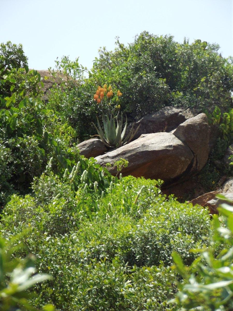 Trek, randonnée et visite d'Axum en Ethiopie. Autour d'Axum. Gobo Dura, la Forêt de Granit