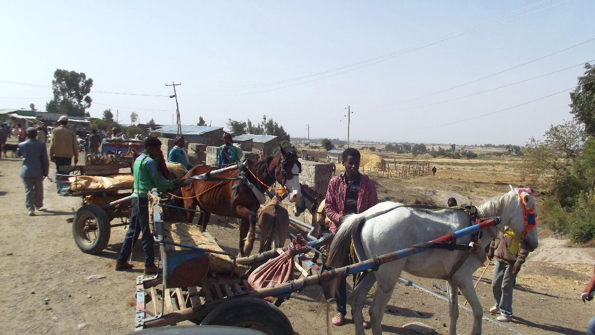 La route étant impraticable en voiture, les garis ont encore beaucoup de travail à Adadi. Voyage Séjour Trek et randonnée, Road trip et visite de la Région Oromia en Ethiopie.  Adadi.