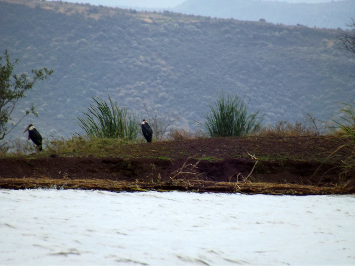 La faune du Lac Chamo en Ethiopie. Voyage Séjour Trek Trekking Randonnée Road Trip en Ethiopie Visite de la Vallée de l'Omo en Ethiopie.