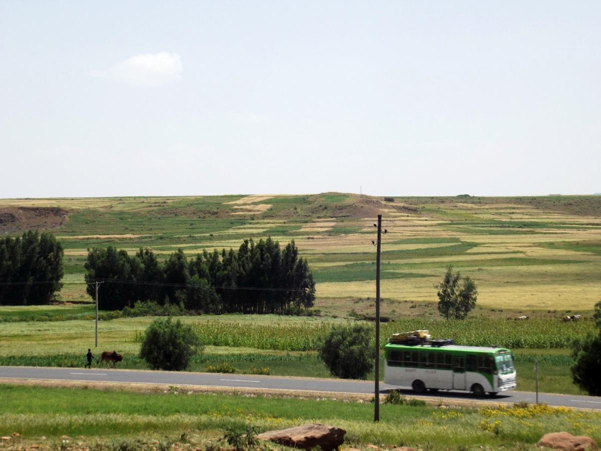 Gobo Dura se situe dans une plaine à 4 km d'Axum. Trek, randonnée et visite d'Axum en Ethiopie. Autour d'Axum. Gobo Dura, la Forêt de Granit