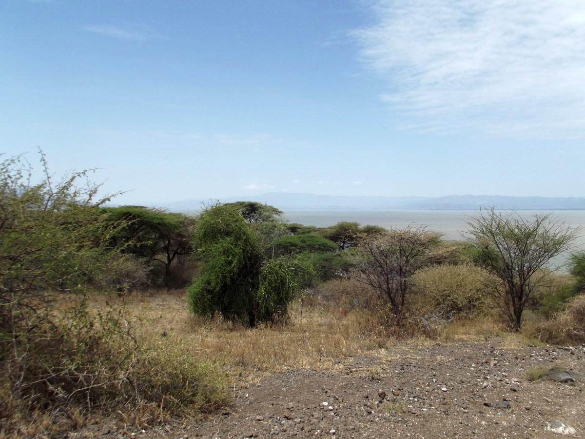 La Flore. La Réserve de Nech Sar. Voyage Séjour Trek Trekking Randonnée Road Trip en Ethiopie Visite de la Vallée de l'Omo en Ethiopie.