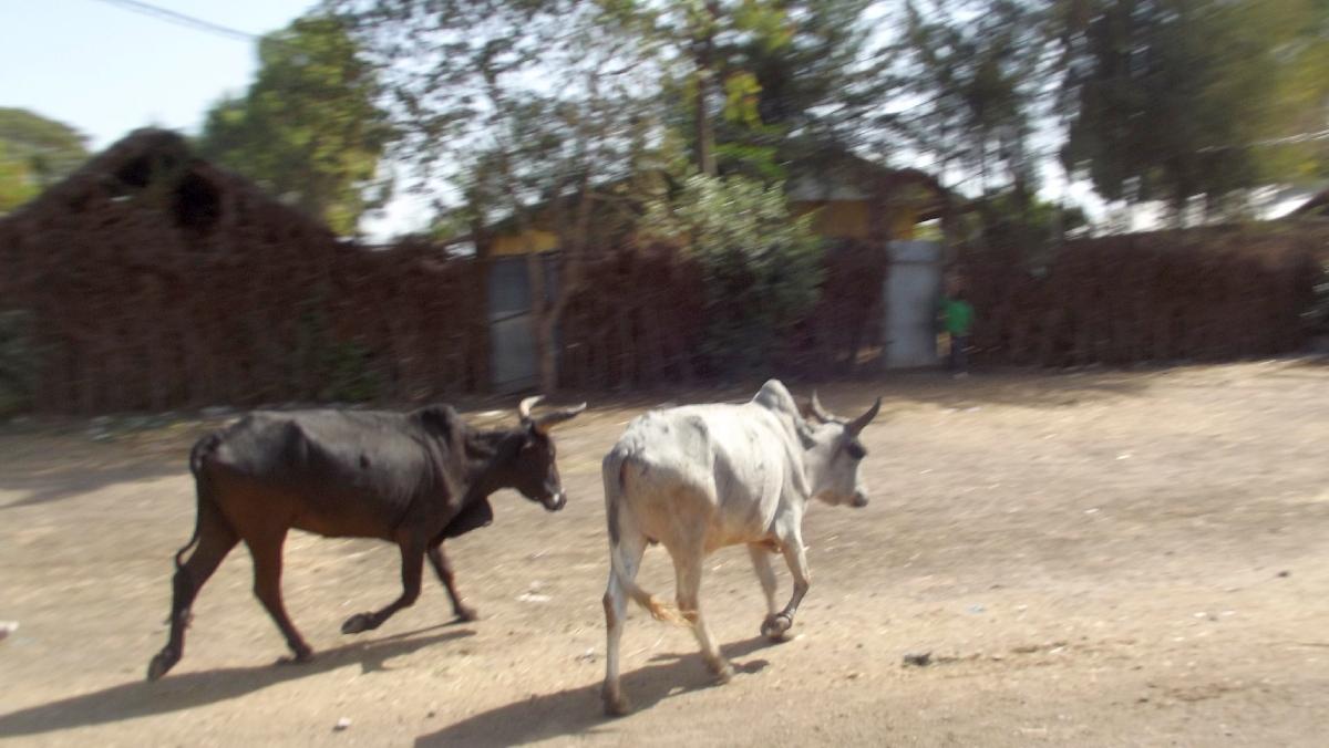 Voyage Séjour Trek et randonnée, Road trip et visite de la Région Oromia en Ethiopie.  Adadi.