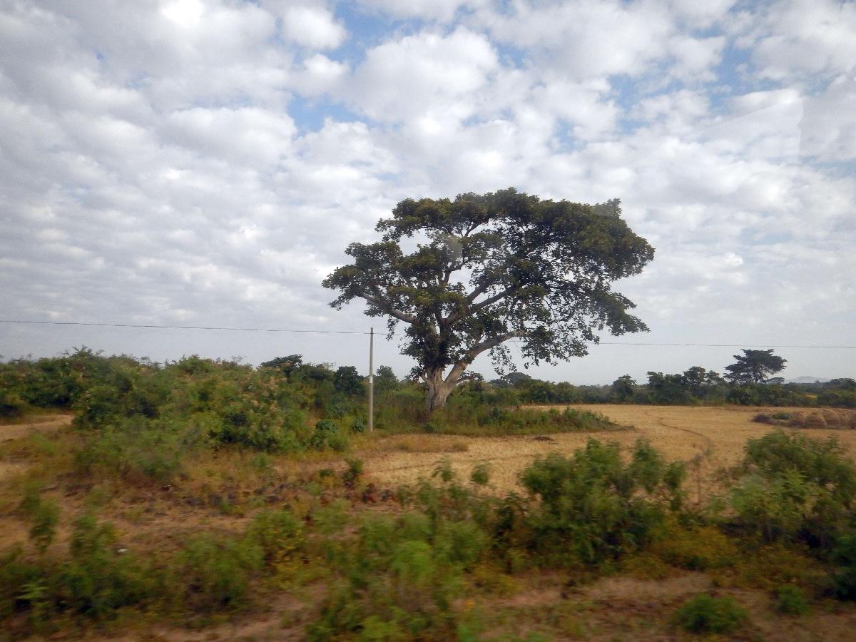 Vert comme la nature éthiopienne
