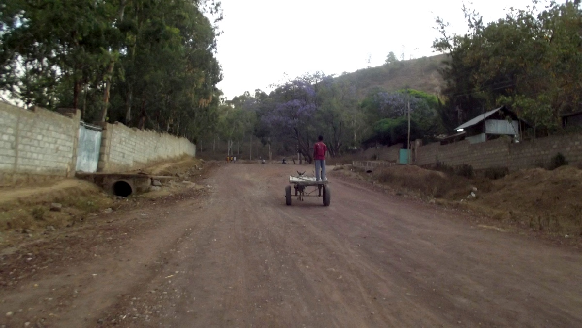 Voyage Séjour Trek Trekking Randonnée Road Trip Visite de la Région Oromia en Ethiopie, la ville Awassa . Le Lac d'Awassa.  Faune Flore d'Éthiopie