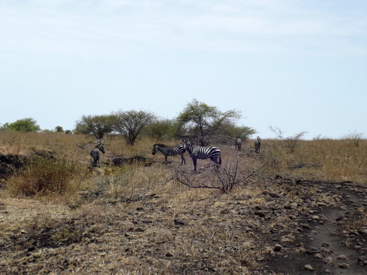 La Faune. La Réserve de Nech Sar. Voyage Séjour Trek Trekking Randonnée Road Trip en Ethiopie Visite de la Vallée de l'Omo en Ethiopie.