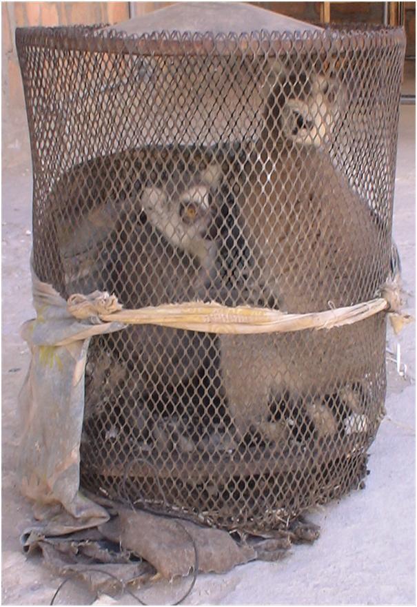 Ce n'est pas une cage de transport mais bien une cage de vie des Lémuriens