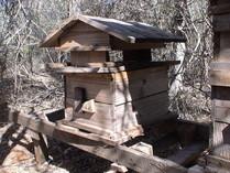 Une ruche Vazaha