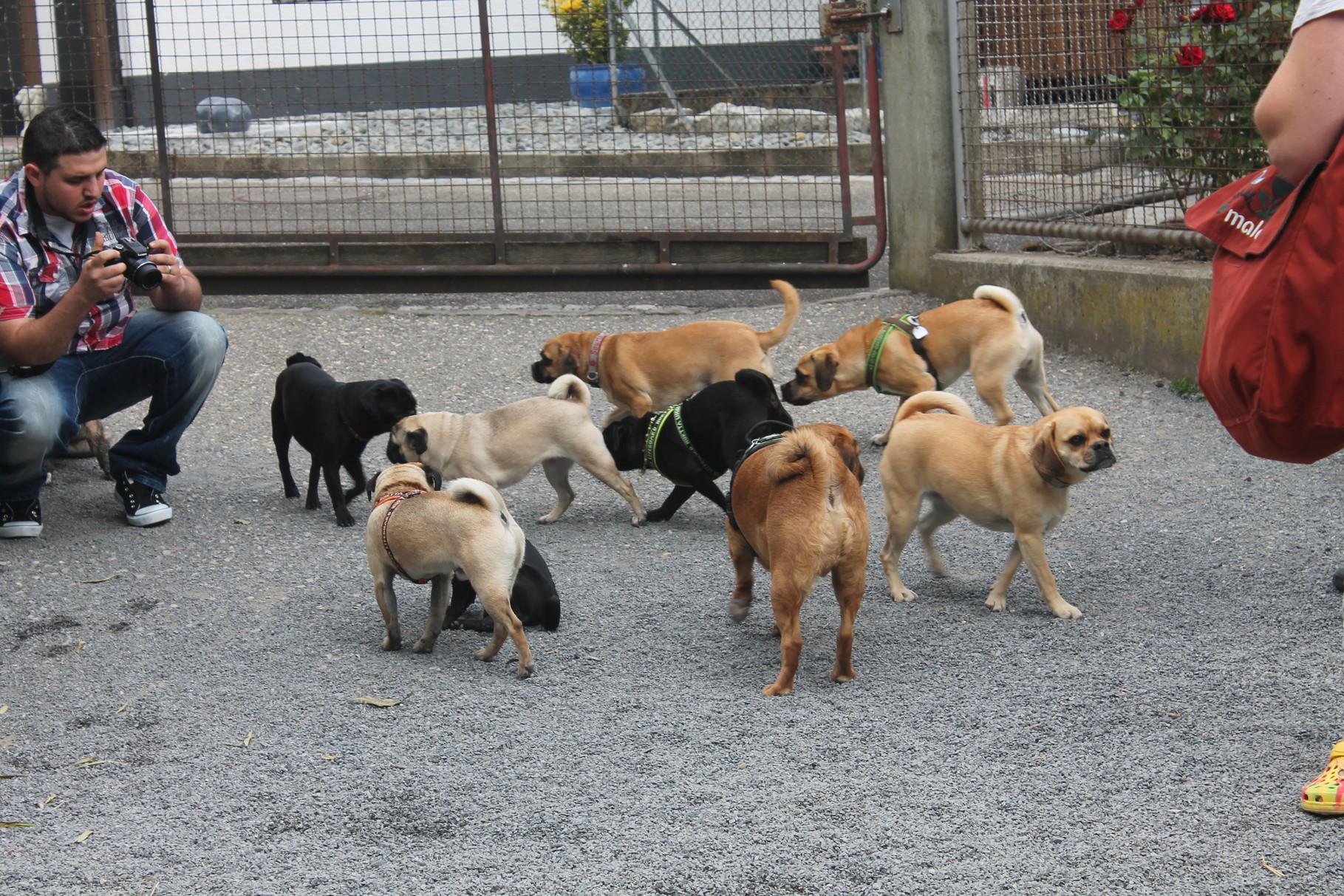 auch die Hunde begrüssen sich :-)