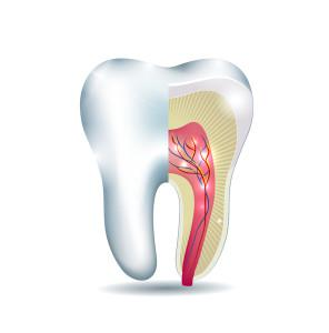 Root Canal Therapy | Central Maine Dentistry - 99designs