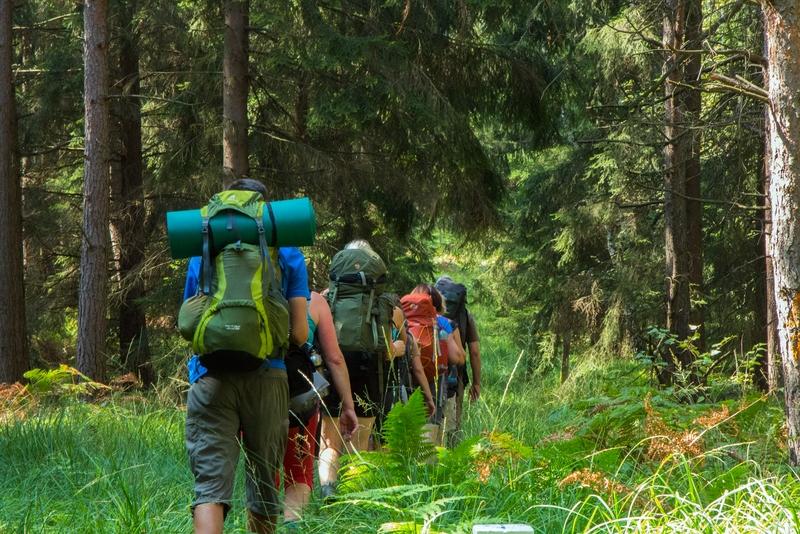 Anke Wolfert: Auf dem Forststeig unterwegs