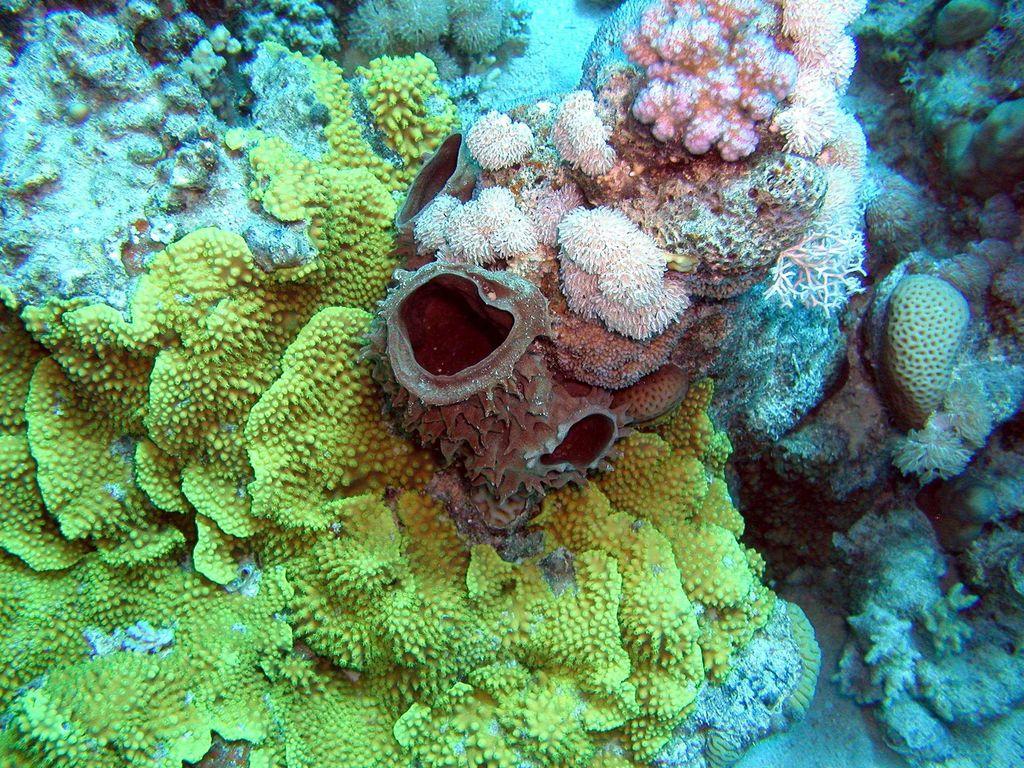 Wünderschöne Unterwasserwelt