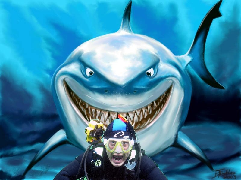 Wer hat Angst vorm weißen Hai ??