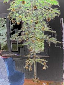 Dieses invertierte Foto von Thorsten Hülsberg zeigt einen Weihnachtsbaum der in einem Wohnzimmer unter der Decke hängt.