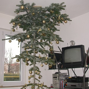 Dieses Farbfoto von Thorsten Hülsberg zeigt in einem Wohnzimmer einen geschmückten Weihnachtsbaum an der Decke.