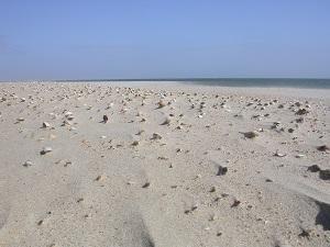 Diese Farbfotografie von Thorsten Hülsberg zeigt einen Sandstrand voller Muscheln.