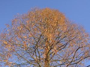 Diese Farbfotografie von Thorsten Hülsberg zeigt einen Baum im Herbst.
