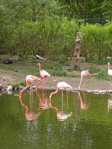Diese Farbfotografie im Hochformat von Thorsten Hülsberg zeigt Flamingos in und an einer Wasserstelle.