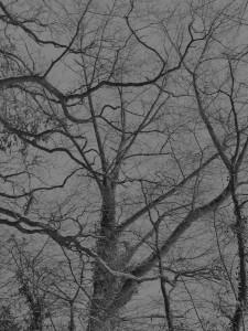 Diese Schwarzweißfotografie von Thorsten Hülsberg zeigt herbstliche Novemberbäume.