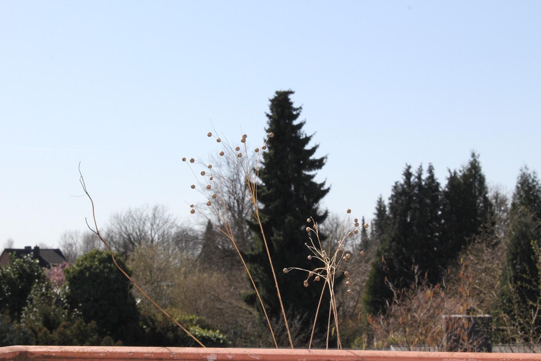 Brauch Grünes aufm Balkon aber …