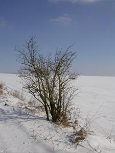 Diese Farbfotografie von Thorsten Hülsberg zeigt eine Winterlandschaft.
