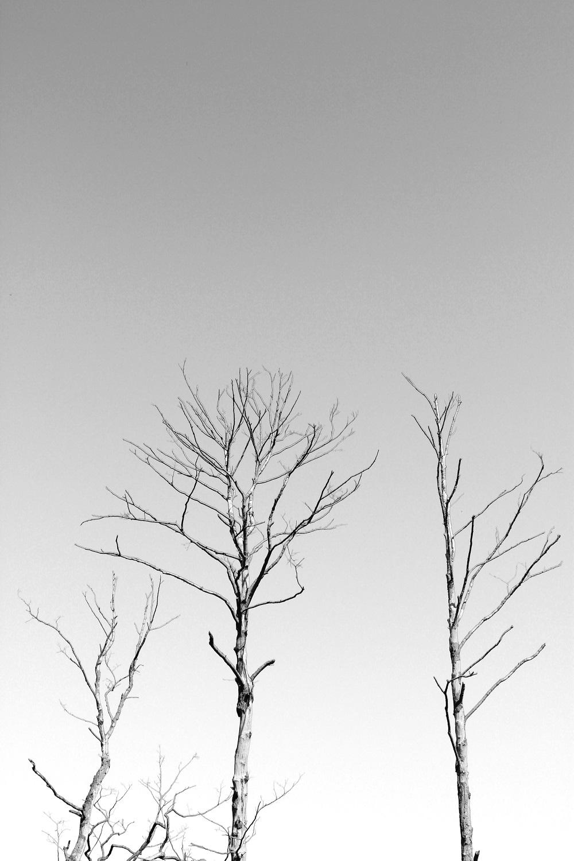 Geisterbäume. Spreewald.
