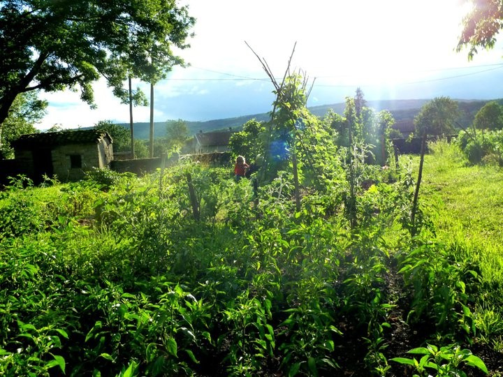 un jardin agroécologique
